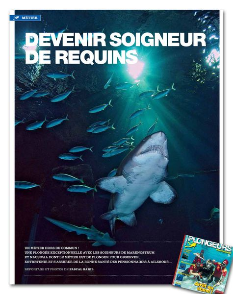 PLONGEURS INTERNATIONAL N°138 : &quot&#x3B;Devenir soigneur de requins&quot&#x3B; !