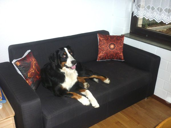 Cushions &quot&#x3B;Chestnut&quot&#x3B; and &quot&#x3B;Ancient Marble&quot&#x3B; with dog &quot&#x3B;Socke&quot&#x3B;