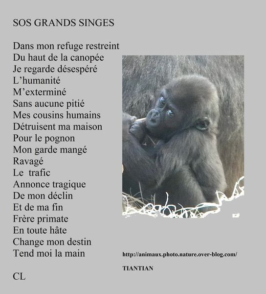 SOS GRANDS SINGES