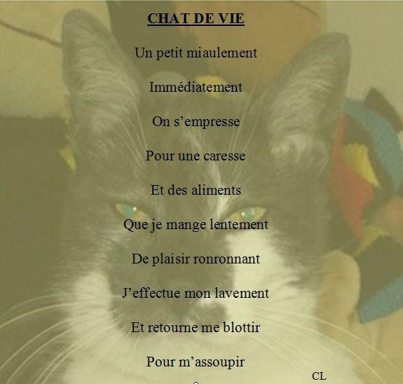 CHAT DE VIE