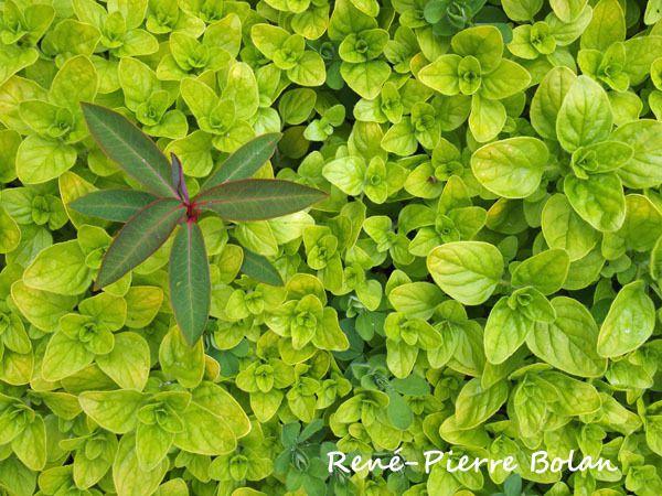 Si vous pouvez déterminer ces plantes, merci de me renseigner !