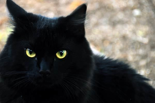 Le chat noir de la rédaction