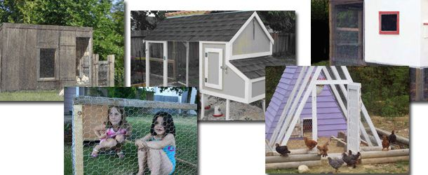 CHICKEN COOP BUILDING PLANS HOUSE STEPS BY STEPS   HOW TO BUILD A CHICKEN  COOP