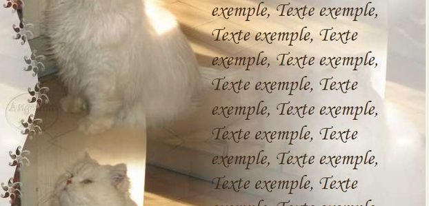 Chat blanc Incredimail & Papier A4 h l & outlook & enveloppe & 2 cartes A5 & signets 3 langues  chat_nadia_img_0550_1_00