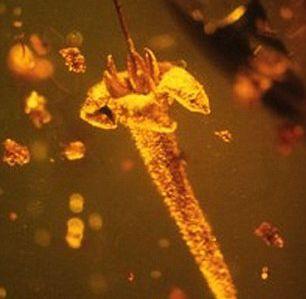 Découverte d'une fleur toxique de plus de 20 millions d'années