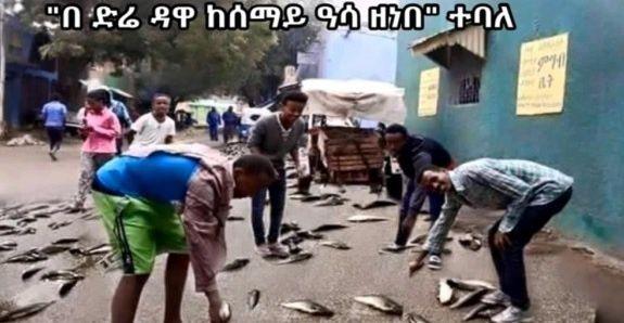 Pluie de poissons à Dire Dawa en Ethiopie