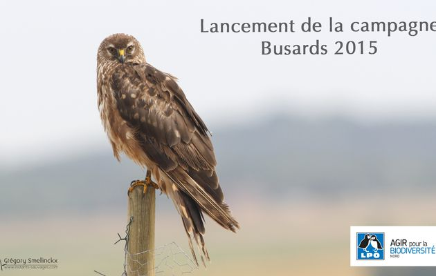 Campagne BUSARDS 2015