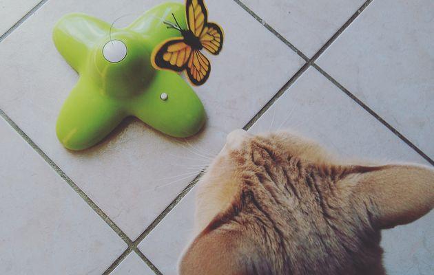 Oliver a testé le jouet électronique papillon 🦋