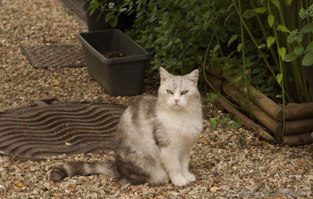 Sacha, le chat..