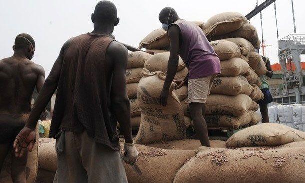 Ouverture de la campagne café –cacao , aujourd'hui : Les producteurs exigent une hausse des prix