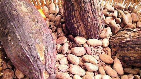 La Côte d'Ivoire veut faire du cacao la première source de richesse du pays