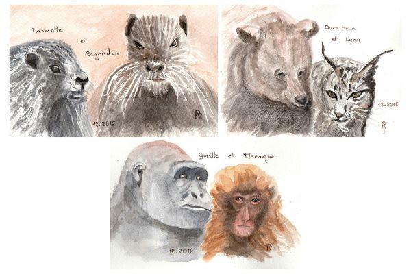 Jeux-devinettes : Portraits de mammifères (4)