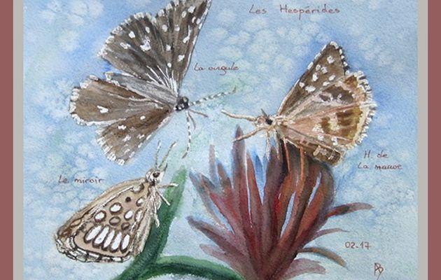 Jeux-devinettes :Portraits de papillons (5)