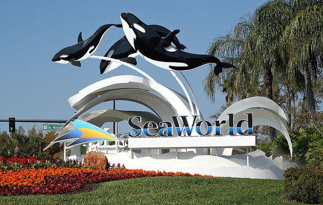 Seaworld - 11 Août 2013