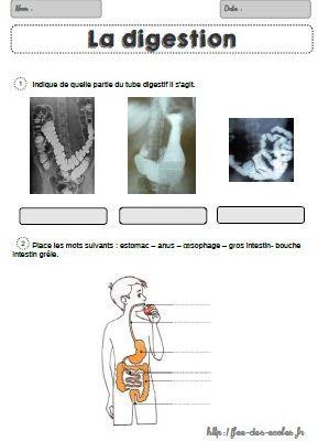 La digestion CM1-CM2