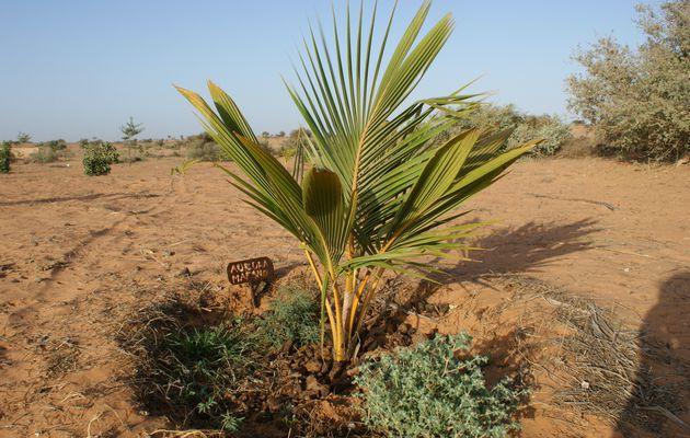 UN EVENEMENT IMPORTANT autour de l'Agroécologie au SENEGAL...