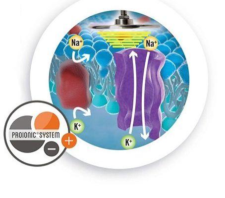 Le système Proionic INDIBA (448 kHz) mobilise les ions intra et extracellulaires d'une manière spécifique
