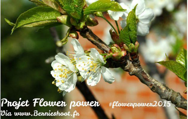 Flower Power 2015 - blogs