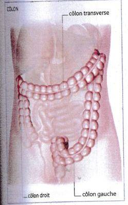FRANCE - Luttes intestines à l'Assemblée Nationale !!