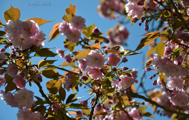 C'est le printemps...