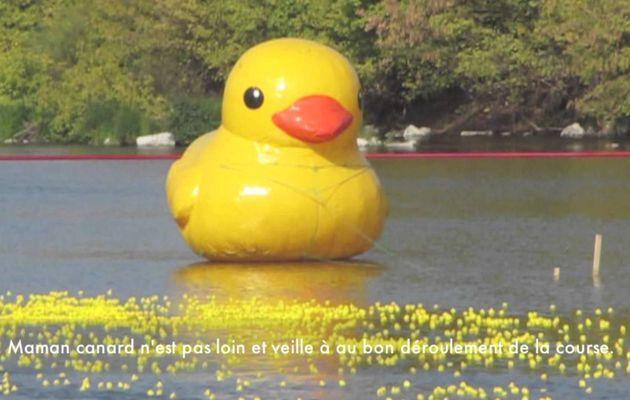 Le canard en plastique