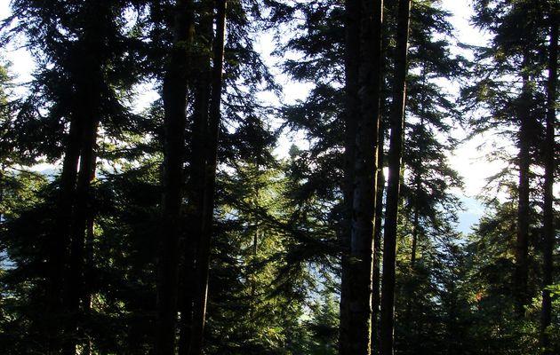 lumières de la forêt: