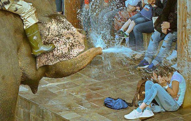 PAIRI DAIZA, LE ROYAUME DES ELEPHANTS