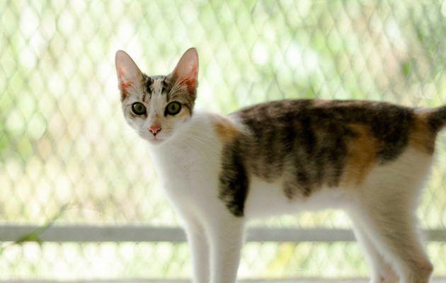 Princesse - femelle - 5 mois - à adopter
