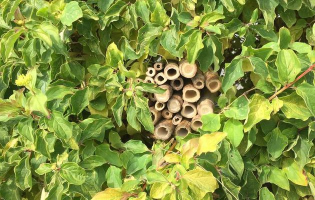 Un jardin accueillant pour les insectes