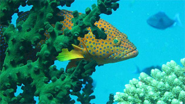 La faune sous marine