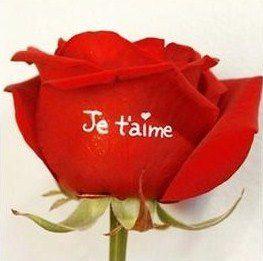 Offrir des fleurs, c'est ouvrir son coeur !