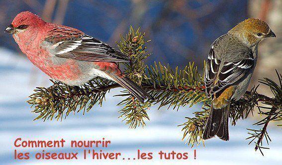 Pensez à nourrir les oiseaux pendant l'hiver