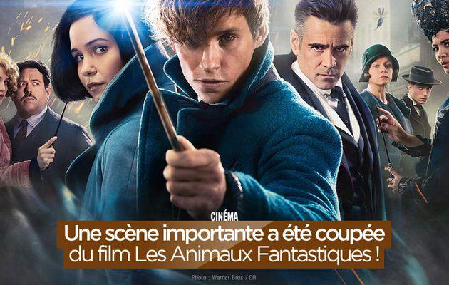 Une scène importante a été coupée du film Les Animaux Fantastiques ! #LesAnimauxFantastiques