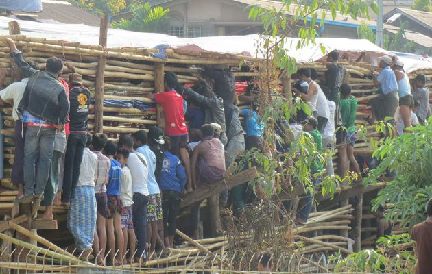 Semaine 47 (Birmanie)