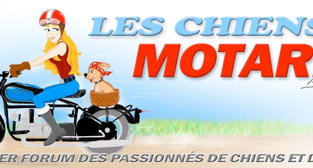 Les Chiens Motards: Le Forum - Megaphone, Motards et motos