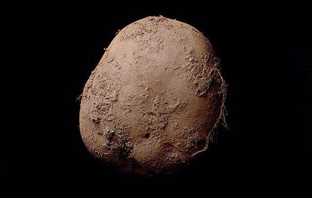 La photo de cette patate a été vendue 1.000.000 d'euros !