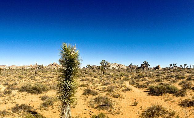 Joshua Tree National Parc
