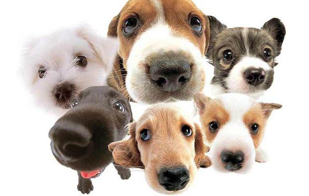 NUEVA ZELANDA RECONOCE LEGALMENTE A LOS ANIMALES COMO SERES SINTIENTES
