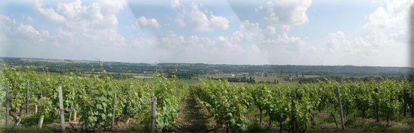 Vignes, vins et randos au coeur du Val de Loire