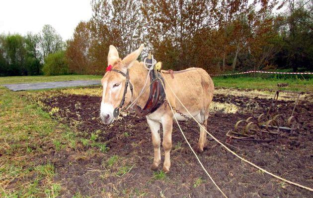 Montoire : Salon des ânes
