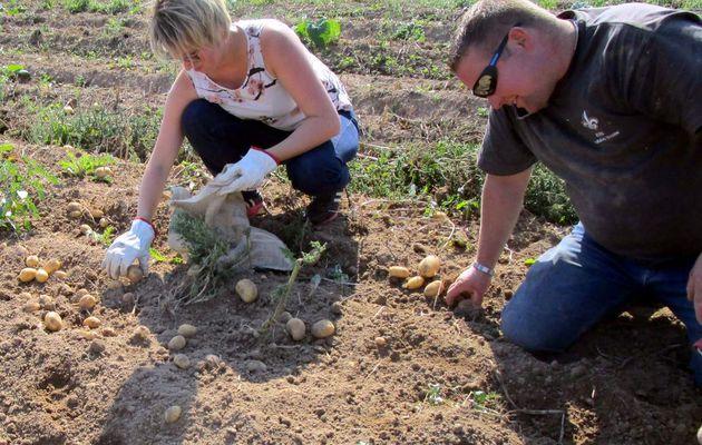 Saint-Martin-des-Bois : Fête de la patate : les préparatifs s'accélèrent !