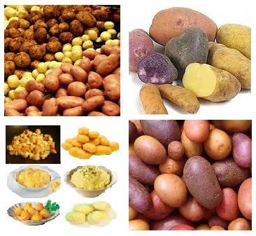 Cultiver des pommes de terre sur un balcon