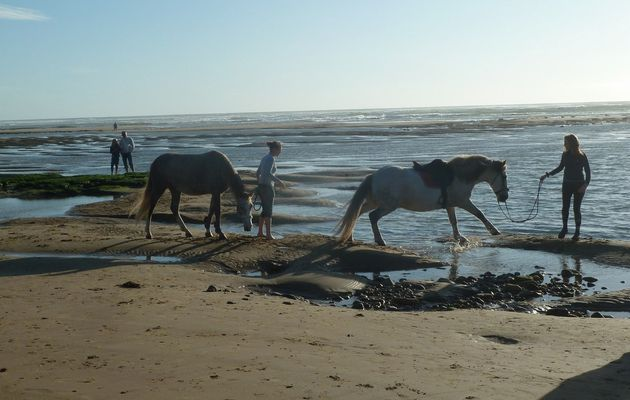 Chevaux sur la plage du Veillon à Port Bourgenay (85)