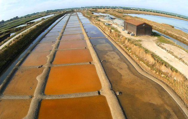 Les marais salants de l'Île d'Olonne en septembre