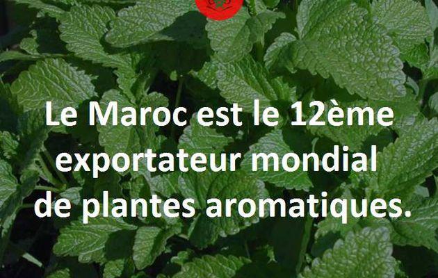 Maroc : 12eme exportateur mondial de plantes aromatiques.