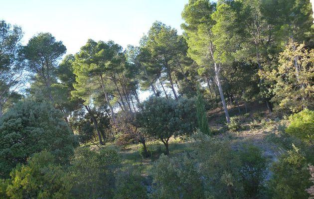 Le bois du Devens