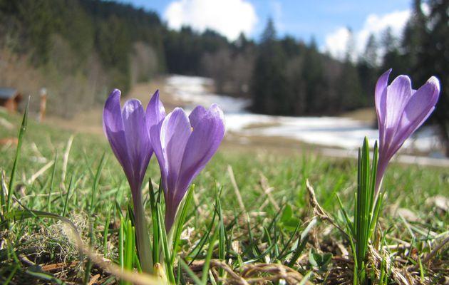 Flower power le 29/03/17