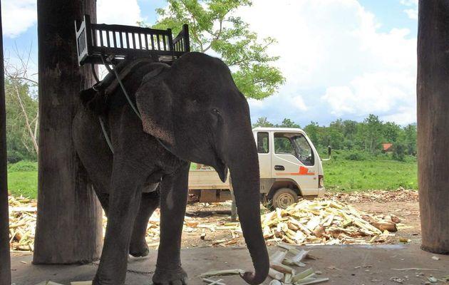 Les éléphants et la cascade Tat Kuang Si