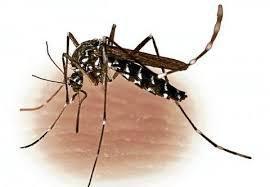 Tahukah Anda Raja yang Mati Karena Nyamuk? Simak disini !