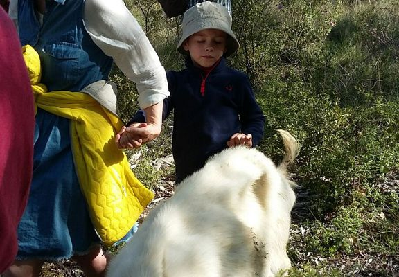 Un samedi à la campagne avec les chèvres d'Odile, la fromagère.